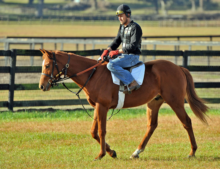 Town Amp Country Farms Breeding Racing Sales